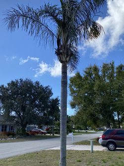 Free Palm Tree for Sale in Fort Myers,  FL
