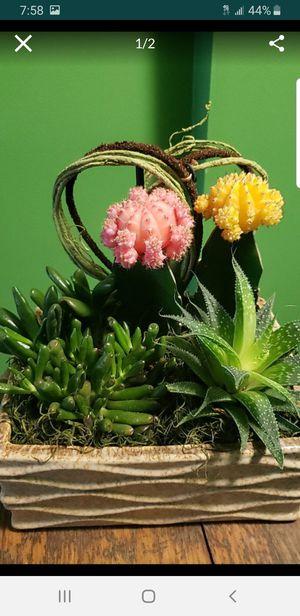 Cactus arrangement for Sale in Clinton, MD
