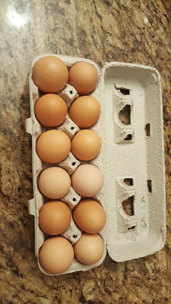 Fresh Brown Range Free Organic Eggs