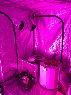 Grow tent, lights, hoods, ballasts, fans, and nutrients for Sale in Denver, CO