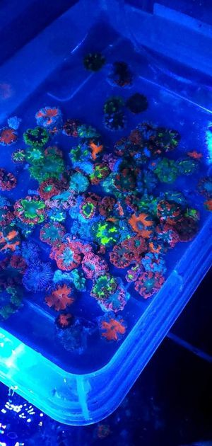 Frags for Sale in Cooper City, FL