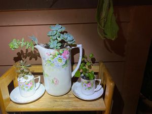 Tea Set of succulents for Sale in Hayward, CA