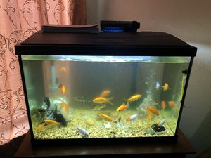 Aquarium 20 gallon with all accessories 320 for Sale in Houston, TX