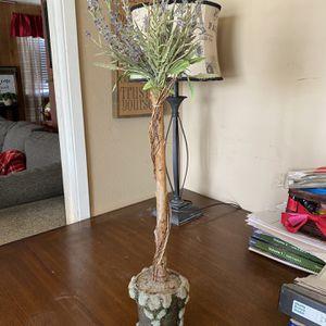 Decorative Lavender Moss Plant for Sale in Stockton, CA