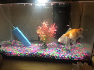 Free Gold Fish + Tank, Pipe, Food and the Rest for Sale in UNIVERSITY PA, MD