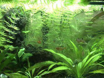 Freshwater Aquarium for Sale in Ben Lomond,  CA