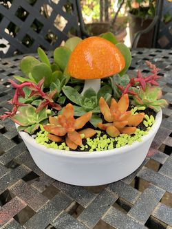 Succulent En Macetita De Barro Pequeña for Sale in Downey,  CA