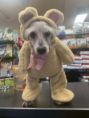 Doggy costumes for Sale in Suwanee, GA