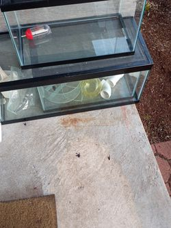 FREE! Glass House For Small Pet(s) for Sale in Waltham,  MA