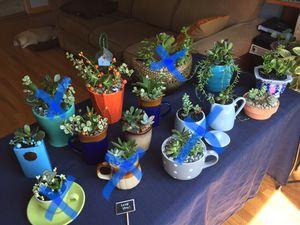 Live Succulent Arrangements/ prices in description/ see all pics for Sale in Mount Prospect, IL