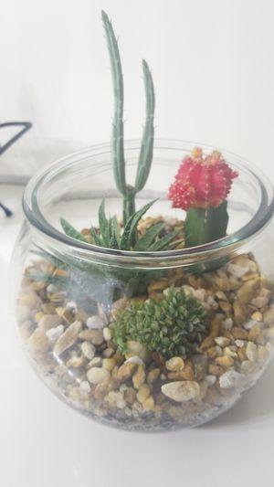 Succulent and cactus garden for Sale in Bay Harbor Islands, FL