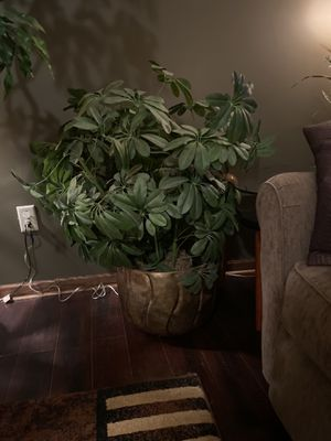Artificial Plant/Tree for Sale in Columbus, OH