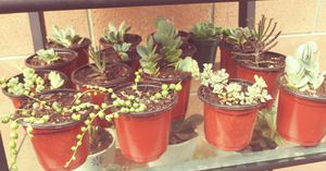 $5 variety of succulents $8 Cactus for Sale in Garden Grove, CA