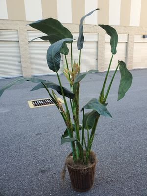 Plastic Plant for Sale in FL, US