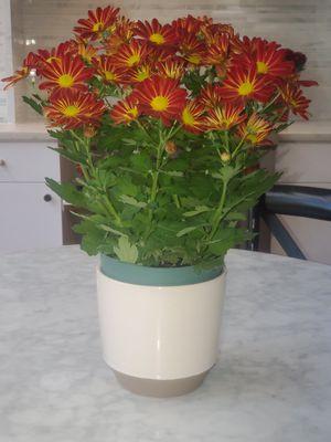 "Modern White Flower Pot Off White Planter 6"" in diameter by 5.75"" high for Sale in Washington, DC"