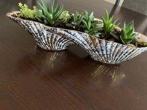 Succulent plant for Sale in Troy, MI