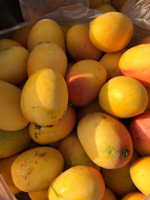 Mangos for Sale in Miami, FL