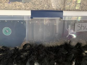 Small Dwarf Hamster With Cage And Accessories for Sale in Gainesville,  FL