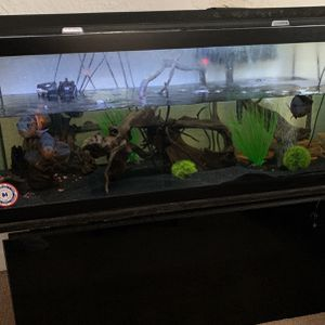 Fish Tank- Complete Set Up (moving Sale) for Sale in Eastchester, NY