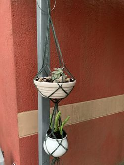 Plants And Pot for Sale in Haines City,  FL