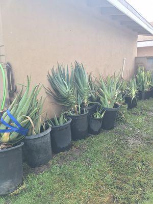 Aloe Vera <Savila> for Sale in Buena Park, CA