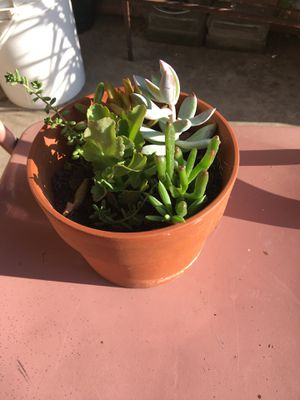 Plants for Sale in Norco, CA