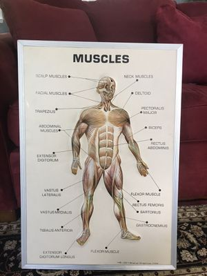 Human body frame for Sale in Yonkers, NY
