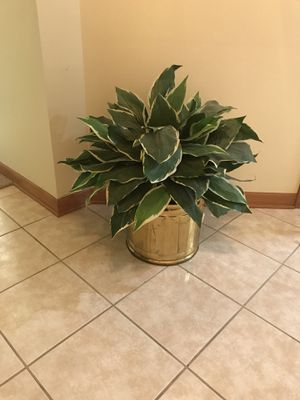 Fake plant for Sale in Sterling Heights, MI