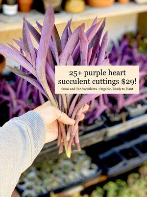 Purple Heart succulent plant cuttings 25+ stems for Sale in Duarte, CA