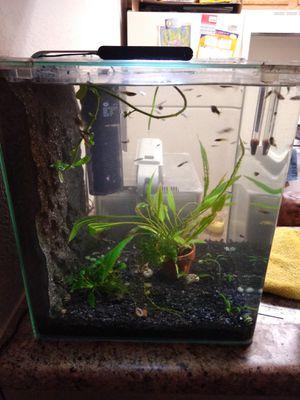 6 gallon rimless aquarium for Sale in Phoenix, AZ