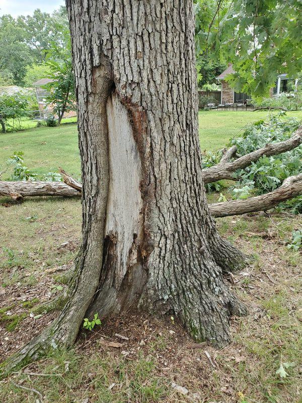 Free lumber oak wood