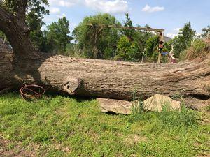 Oak Tree for Sale in Tyler, TX