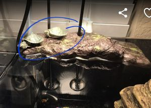 Small Baby Turtle Tank for Sale in Corona, CA