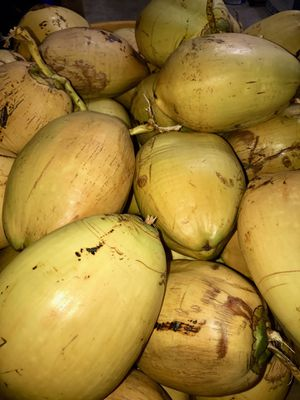Organic coconuts for Sale in Pinecrest, FL