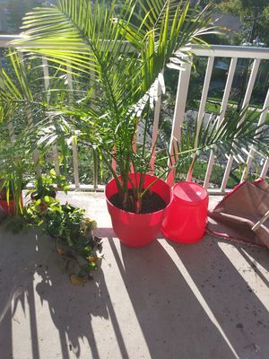 Live plants in decorative potting for Sale in Bladensburg, MD