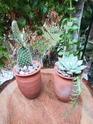Succulents en macetitas de barro pequeña s $6EACH for Sale in South Gate, CA