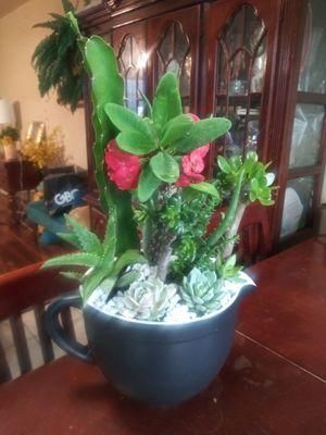 Succulents en cactus en tasa grande de cerámica for Sale in Bell, CA