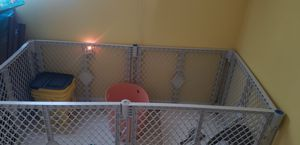 Rectangular pet gate for Sale in Clearwater, FL