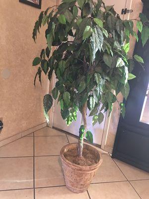 Artificial plant for Sale in Phoenix, AZ