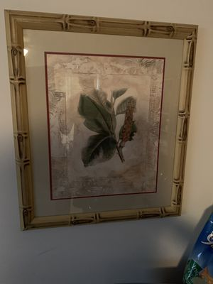 Framed Picture of Plant for Sale in Winter Springs, FL