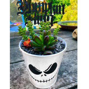 Jack skellington Succulent Arrangement for Sale in Montclair, CA