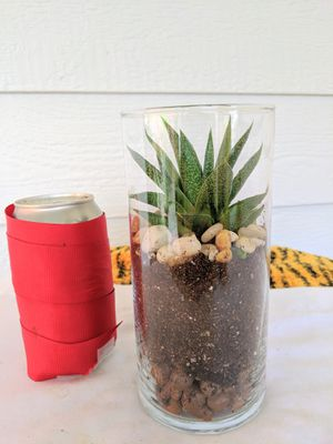 Haworthia Succulent Plant in Glass Pot/ Vase- Real Indoor House Plant for Sale in Auburn, WA