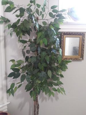 Artificial plants for Sale in Cleveland, OH