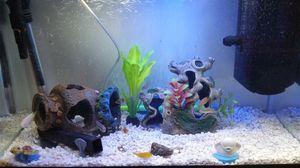 Fish tank 10 gallon setup for Sale in Jersey City, NJ