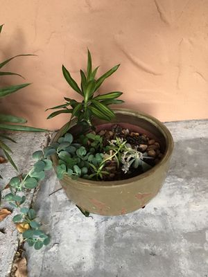 Glazed pot and plants for Sale in Ocoee, FL