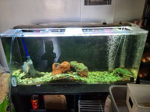 "60 gallon acrylic fish tank 48""x15""x20"" built in over flow filtration system in rear of tank for Sale in Anaheim, CA"