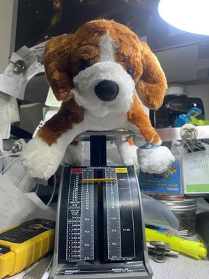 Webkinz Beagle HM141 new sealed GANZ for Sale in West Covina, CA