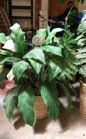 Fake plants for Sale in Tustin, CA