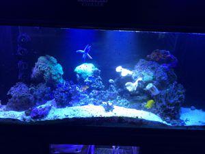125 gallon saltwater aquarium full setup for Sale in Albion, IN