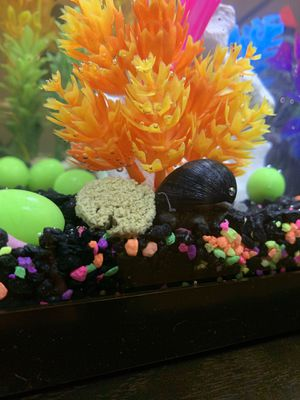10 Gal Fish tank for Sale in Fresno, CA